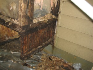 Mold & Rot Caused by Lack of Drainage Plane